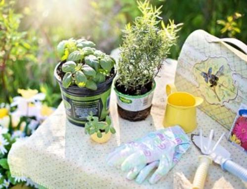 Horticulture Programme Postponed